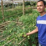 Horticulture intervention in Dhemaji and Boko, Assam